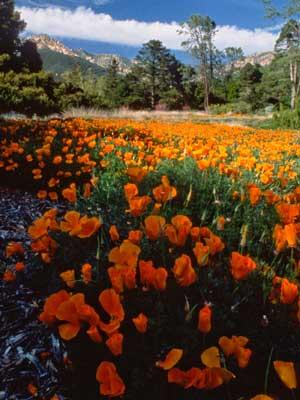 Botanic Garden and mountains